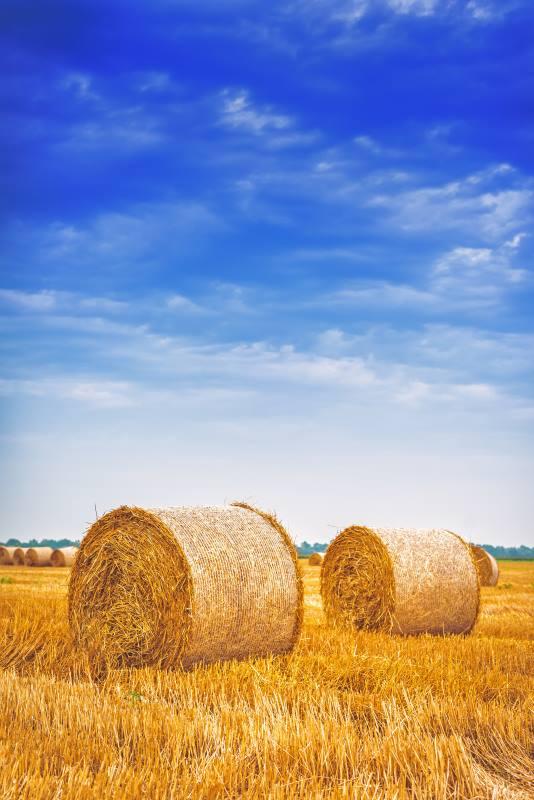 Oregon Hay Bales